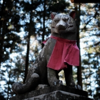 In search of Japan's lost wolves: Primal howl