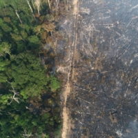 Fines that protect the Amazon systematically obstructed under Jair Bolsonaro