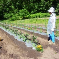 Organic farming has seen a rise in popularity in recent years in Japan.   KYODO