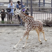 Zoos in Japan are increasingly using the Wish List feature on Amazon's shopping website as a way to accept donations that better suit their needs. | KYODO