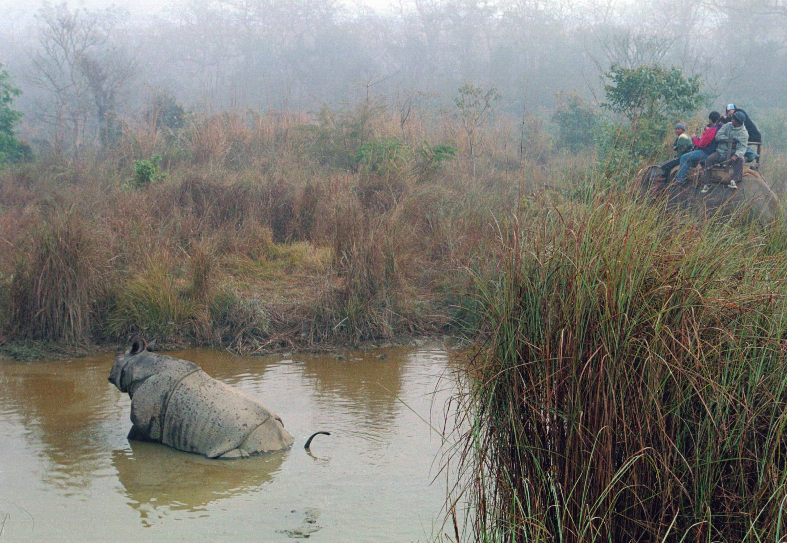 People riding an elephant watch a rhino bathing in a pond in the Chitwan National Park. | REUTERS