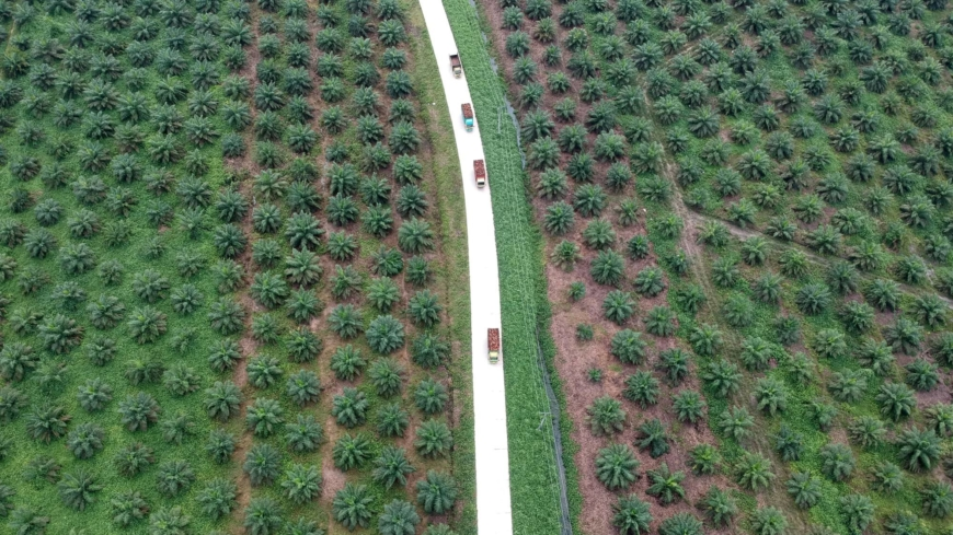 To hit climate goals, Indonesia urged to permanently ban new palm oil plantations