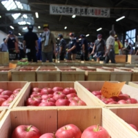 Agricultural income insurance gains traction in Japan's Tohoku region