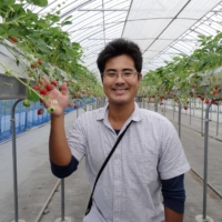 Ryoki Sato, CEO of Agri-na Rice Paddy Art Village, shows off the farm's strawberry greenhouse, which runs on 100% geothermal energy in winter. | RYOKI SATO