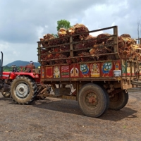 A farmer prepares to unload oil palm bunches from a tractor trolley in a mill at Dwaraka Tirumala in the southern state of Andhra Pradesh, India, on Sept. 1.    REUTERS