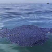 An oil patch floats in the waters off Huntington Beach, California, on Sunday.   BLOOMBERG